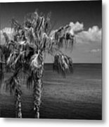 Palm Trees In Black And White At Laguna Beach Metal Print