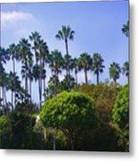 Palm Trees. My Beautiful California Metal Print