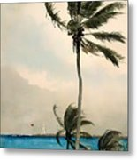 Palm Trees - Nassau Metal Print