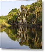 Palm Trees Reflections Metal Print
