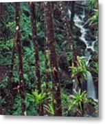 Palm Trunks And Waterfall El Yunque Metal Print