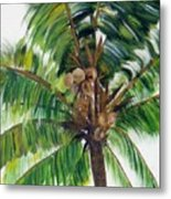 Palma Tropical Metal Print