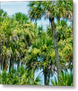 Palmetto Palm Trees In Sub Tropical Climate Of Usa Metal Print