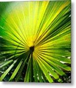 Radial Palm Metal Print