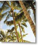 Palms Against Blue Sky Metal Print