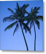 Palms And Blue Sky Metal Print