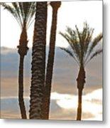 Palms And Light Metal Print