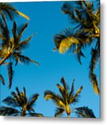 Palms And Sky Metal Print
