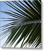 Palms To The Sky Metal Print