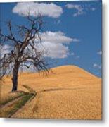 Palouse Wheat Field Metal Print
