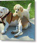 Pals - Linus And Buddy Metal Print