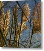 Pampas Grass At Sunset Metal Print