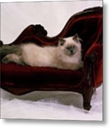Pampered Pussy Cat Metal Print