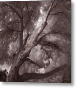 Pams Tree  Two B And W Metal Print