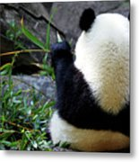 Panda Bear Eating Bamboo Metal Print