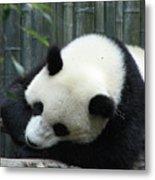 Panda Bear Sleeping On A Fallen Tree Branch Metal Print