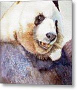 Panda Eating Metal Print by Bonnie Rinier