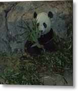 Panda Lunch Metal Print