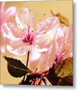 Panoplia Floral Metal Print