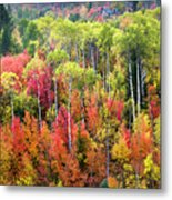 Panoply Of Autumn Color Metal Print