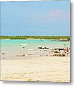Panorama Of The El Garrapatero Beach On Santa Cruz Island In Gal Metal Print