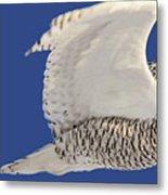 Panoramic Prairie Snowy Owl  Metal Print