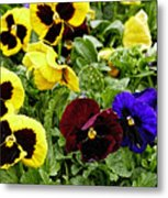 Pansies Of A Different Color Metal Print