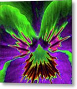 Pansy 02 - Photopower - Thoughts Of You Metal Print