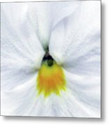 Pansy 05 - Thoughts Of You Metal Print