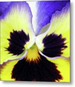 Pansy 09 - Thoughts Of You Metal Print