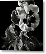 Pansy In Black And White Metal Print