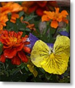 Pansy Play Metal Print