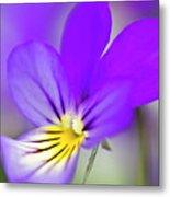Pansy Violet Metal Print