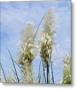 Papas Grass In The Sun Metal Print