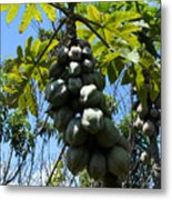 Papayas On A Tree Metal Print