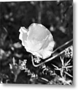 Paper Flower In B And W Metal Print