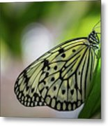 Paper Kite Butterfly- 2 Metal Print