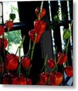 Paper Lantern Plant Metal Print