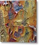 Paperbark Maple   Metal Print