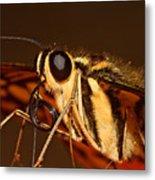 Papilio Demoleus Metal Print