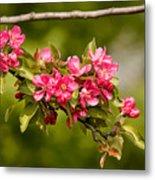 Paradise Apples Flowers Metal Print