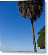 Paradise In Sarasota, Fl Metal Print by Michael Tesar