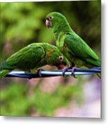 Parakeet Couple Metal Print
