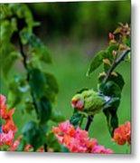 Parakeet South Maui Metal Print