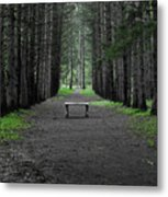 Parallel Pines Metal Print