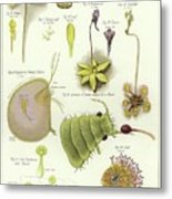 Parasites And Insectivorous Plants Metal Print