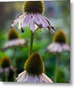 Parched Purple Petals Metal Print