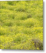 Parker Ranch Field Of Yellow Metal Print
