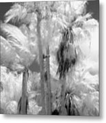 Parking Lot Palms 1 1 Metal Print