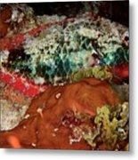Parrot Fish On Night Dive Metal Print